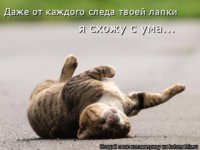 Котоматрица: Даже от каждого следа твоей лапки я схожу с ума...