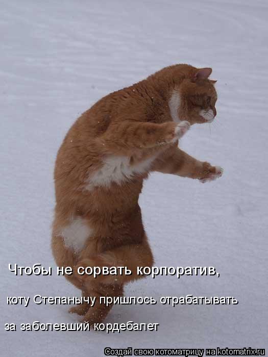 Котоматрица: Чтобы не сорвать корпоратив, коту Степанычу пришлось отрабатывать за заболевший кордебалет