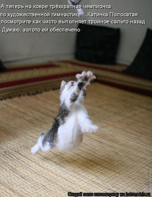 Котоматрица: А теперь на ковре трёхкратная чемпионка по художественной гимнастике ...Катинка Полосатая посмотрите как чисто выполняет тройное сальто н