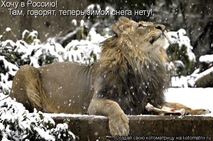 Котоматрица: Хочу в Россию!  Там, говорят, теперь зимой снега нету!
