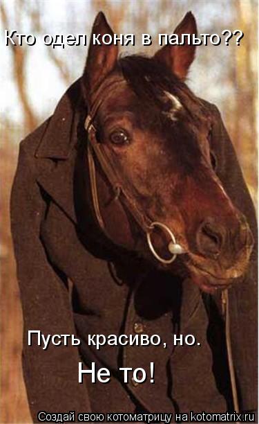 Котоматрица: Кто одел коня в пальто??  Не то! Пусть красиво, но…