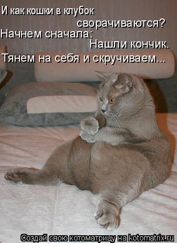 Котоматрица: И как кошки в клубок  сворачиваются? Начнем сначала:  Нашли кончик.  Тянем на себя и скручиваем...
