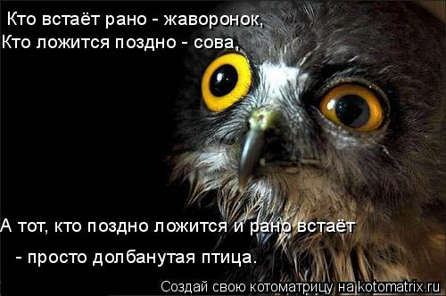 Котоматрица: Кто встаёт рано - жаворонок,  Кто ложится поздно - сова,  А тот, кто поздно ложится и рано встаёт  - просто долбанутая птица.