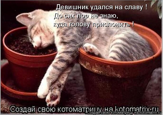 http://kotomatrix.ru/images/lolz/2008/11/30/fg.jpg