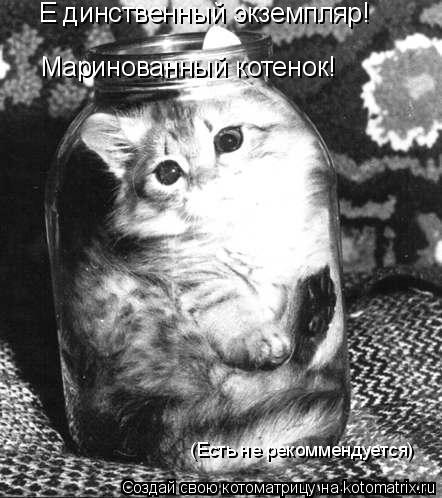 Котоматрица: Е динственный экземпляр! Маринованный котенок! (Есть не рекоммендуется)
