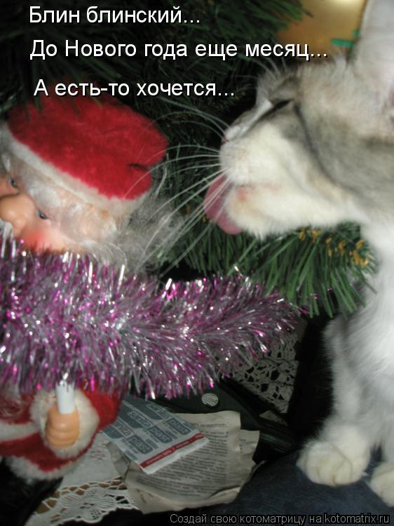 Котоматрица: Блин блинский... До Нового года еще месяц... А есть-то хочется...