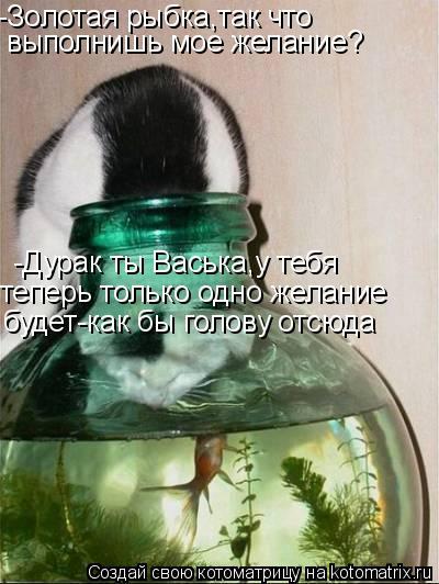 Котоматрица: -Золотая рыбка,так что  выполнишь мое желание? -Дурак ты Васька,у тебя  теперь только одно желание  будет-как бы голову отсюда