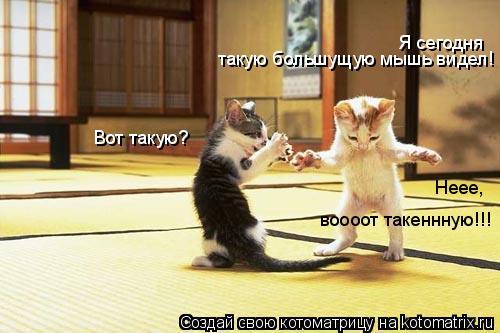Котоматрица: Я сегодня  такую большущую мышь видел! Вот такую? Неее,  воооот такеннную!!!