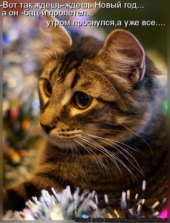Котоматрица: -Вот так ждешь-ждешь Новый год... а он -бац-и пролетел... утром проснулся,а уже все....