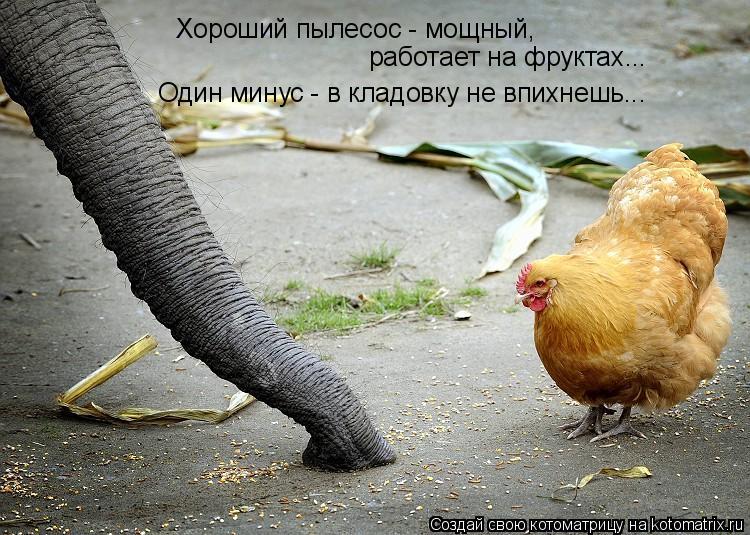 Котоматрица: Хороший пылесос - мощный, работает на фруктах... Один минус - в кладовку не впихнешь...