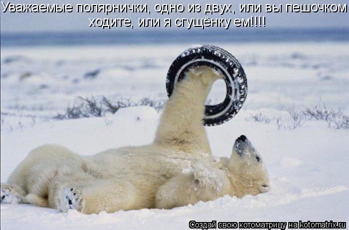 Котоматрица: Уважаемые полярнички, одно из двух, или вы пешочком ходите, или я сгущёнку ем!!!!