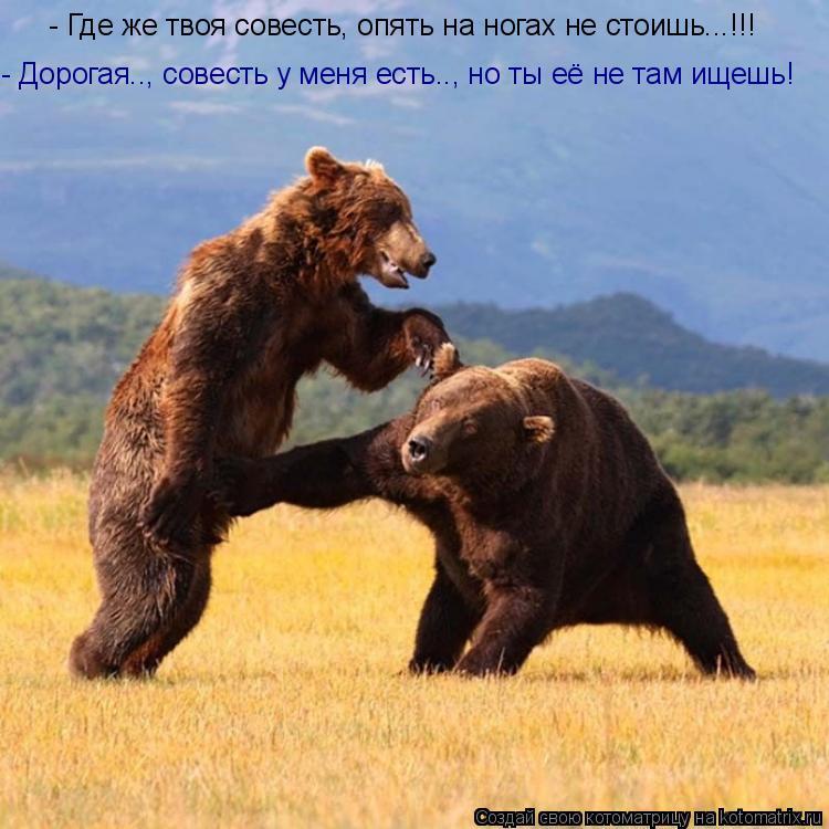 Котоматрица: - Дорогая.., совесть у меня есть.., но ты её не там ищешь! - Где же твоя совесть, опять на ногах не стоишь...!!!