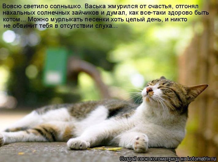 Котоматрица: Вовсю светило солнышко. Васька жмурился от счастья, отгонял  нахальных солнечных зайчиков и думал, как все-таки здорово быть  котом... Можно