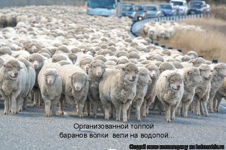 Котоматрица: Организованной толпой баранов волки  вели на водопой...