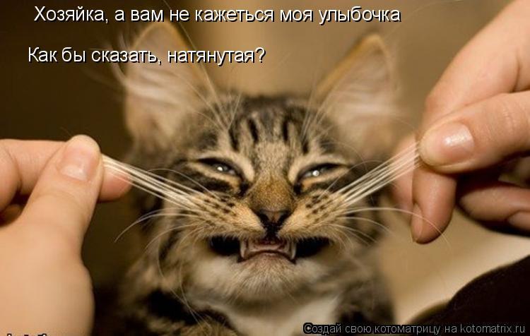 Котоматрица: Хозяйка, а вам не кажеться моя улыбочка Как бы сказать, натянутая?