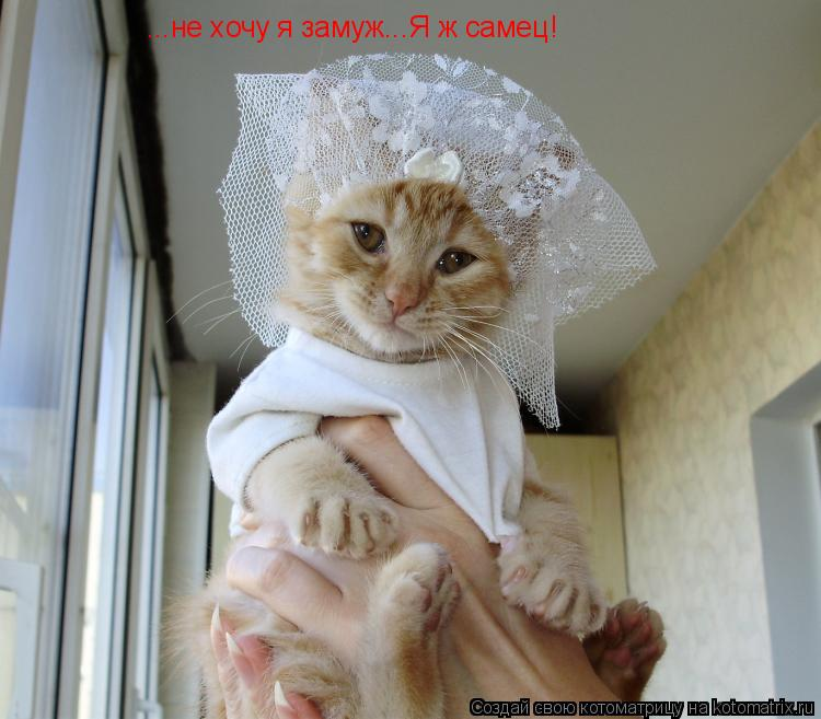Котоматрица: ...не хочу я замуж...Я ж самец!
