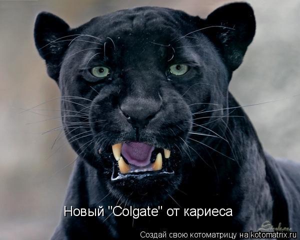 "Котоматрица: Новый ""Colgate"" от кариеса"