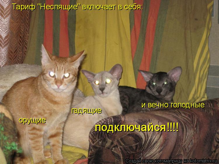 """Котоматрица: Тариф """"Неспящие"""" включает в себя: орущие гадящие и вечно голодные подключайся!!!!"""