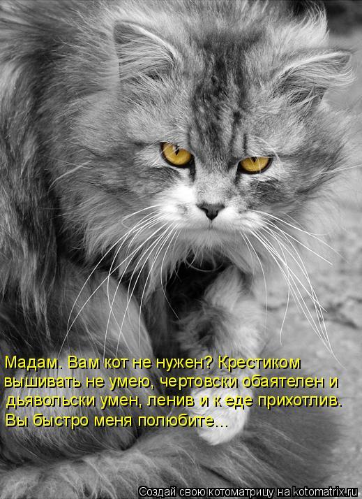 Котоматрица: Мадам… Вам кот не нужен? Крестиком  вышивать не умею, чертовски обаятелен и  дьявольски умен, ленив и к еде прихотлив.  Вы быстро меня полюби
