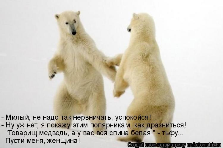 """Котоматрица: - Милый, не надо так нервничать, успокойся! - Ну уж нет, я покажу этим полярникам, как дразниться!  """"Товарищ медведь, а у вас вся спина белая!"""" - т"""