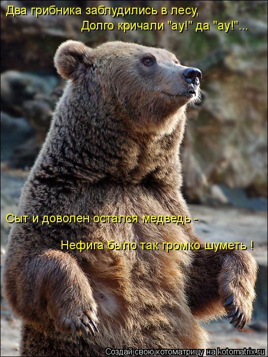 """Котоматрица: Два грибника заблудились в лесу, Долго кричали """"ау!"""" да """"ау!""""... Сыт и доволен остался медведь - Нефига было так громко шуметь !"""