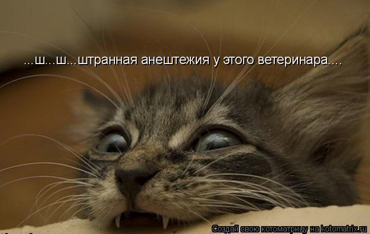 Котоматрица: ...ш...ш...штранная анештежия у этого ветеринара....