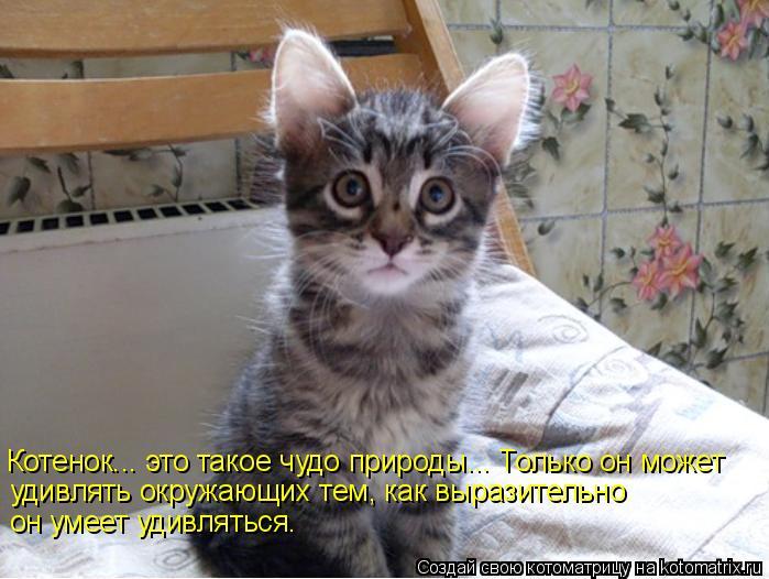 Котоматрица: Котенок... это такое чудо природы... Только он может  удивлять окружающих тем, как выразительно  он умеет удивляться.