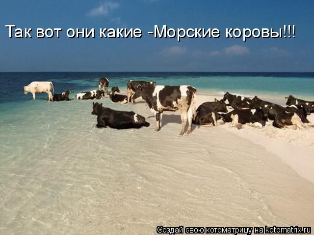 Котоматрица: Так вот они какие -Морские коровы!!!