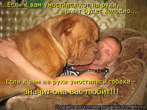 Котоматрица: ...Если к вам умостился кот на руки,  значит будет холодно.... ...Если к вам на руки умостилась собака -  значит она вас любит!!!