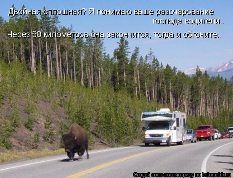 Котоматрица: Двойная сплошная? Я понимаю ваше разочарование господа водители... Через 50 километров она закончится, тогда и обгоните..