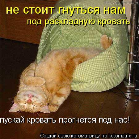 Котоматрица: не стоит гнуться нам под раскладную кровать пускай кровать прогнется под нас!