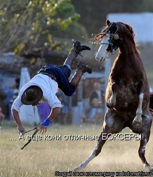 Котоматрица: ... А еще кони отличные БОКСЕРЫ!