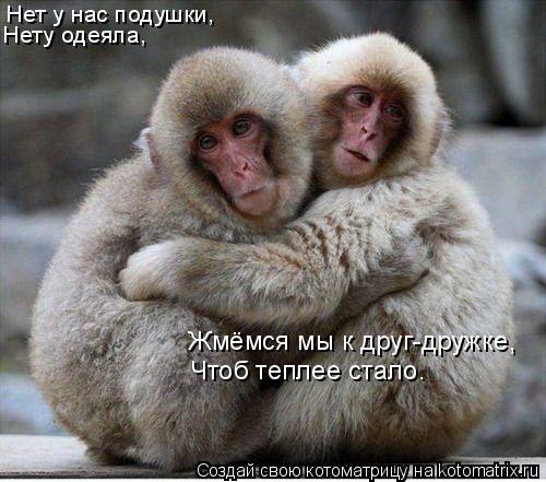 Котоматрица: Нет у нас подушки, Нету одеяла, Жмёмся мы к друг-дружке, Чтоб теплее стало.