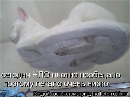 http://kotomatrix.ru/images/lolz/2008/12/05/Ei.jpg