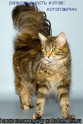 Фото котов разновидность