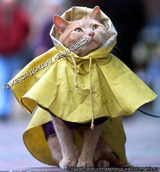 Котоматрица: Кажется дождик начинается!