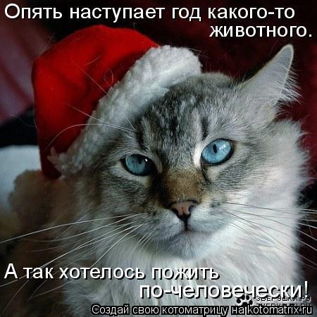 Котоматрица: Опять наступает год какого-то  животного. А так хотелось пожить  по-человечески!