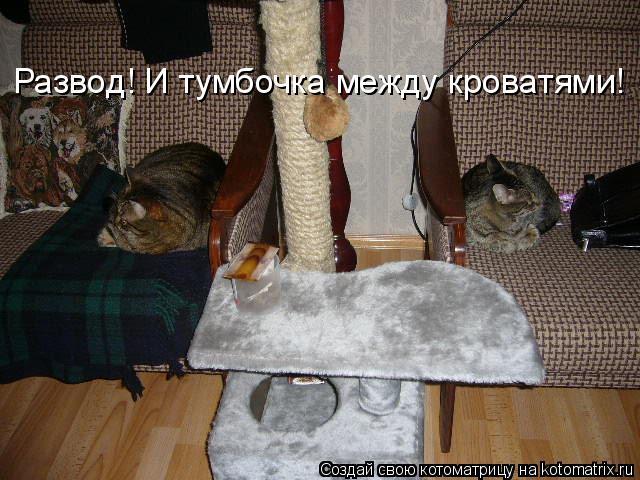 Котоматрица: Развод! И тумбочка между кроватями!