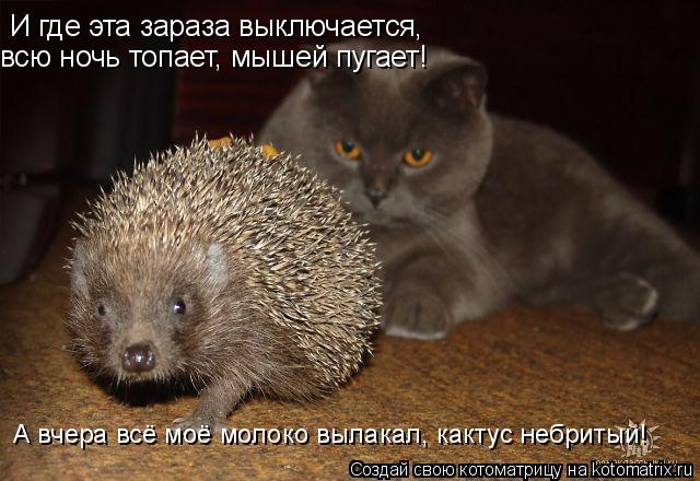 http://kotomatrix.ru/images/lolz/2008/12/06/E.jpg