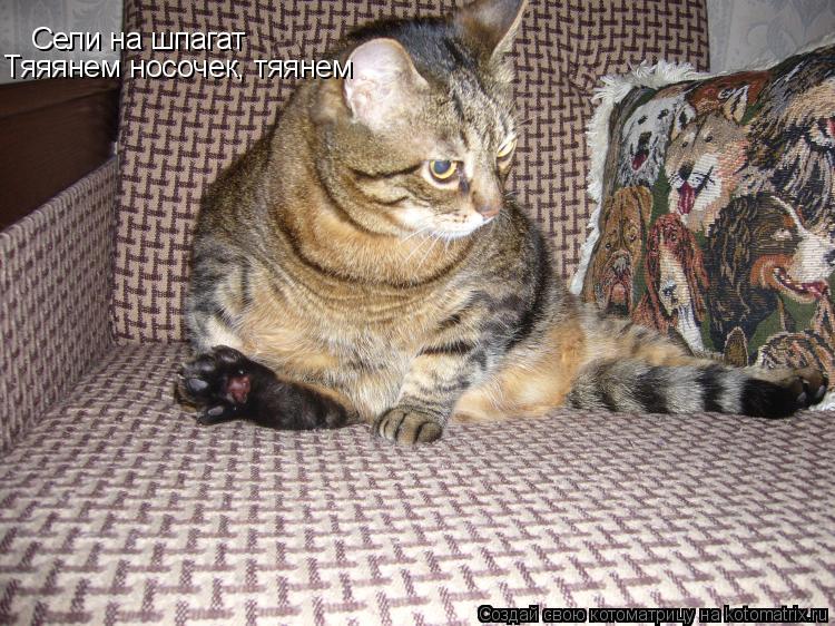 Котоматрица: Сели на шпагат Тяяянем носочек, тяянем