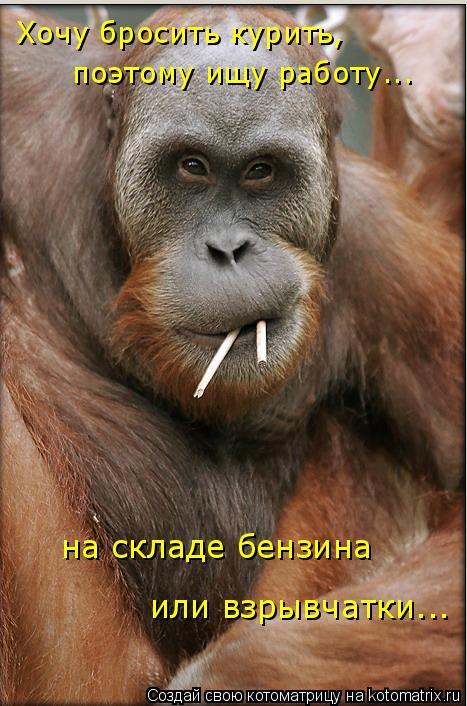 Котоматрица: Хочу бросить курить, поэтому ищу работу... на складе бензина или взрывчатки...