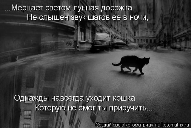 ...Мерцает светом лунная дорожка,  Не слышен звук шагов ее в ночи,  Однажды навсегда уходит кошка,  Которую не смог ты приручить...