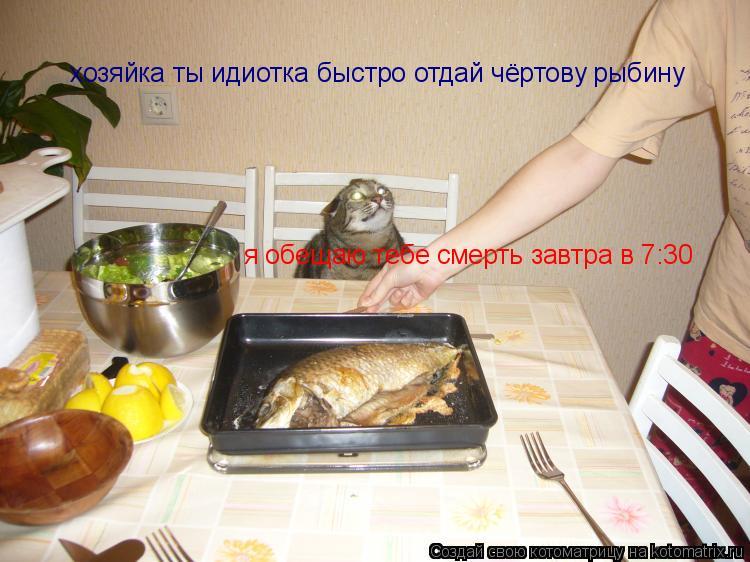 Котоматрица: хозяйка ты идиотка быстро отдай чёртову рыбину я обещаю тебе смерть завтра в 7:30