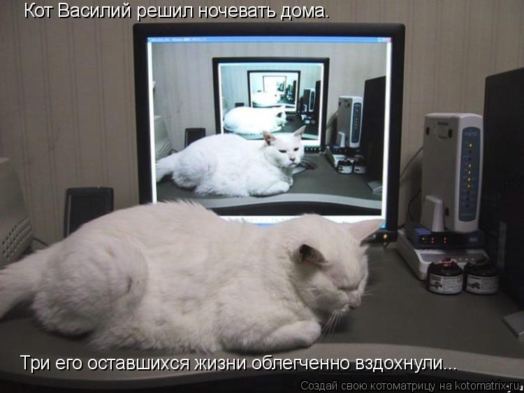 Котоматрица: Кот Василий решил ночевать дома. Три его оставшихся жизни облегченно вздохнули...