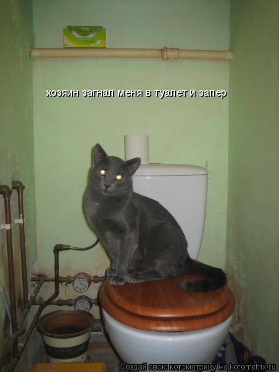 Котоматрица: хозяин загнал меня в туалет и запер