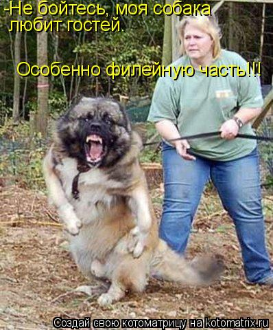 Котоматрица: -Не бойтесь, моя собака  любит гостей. Особенно филейную часть!!!