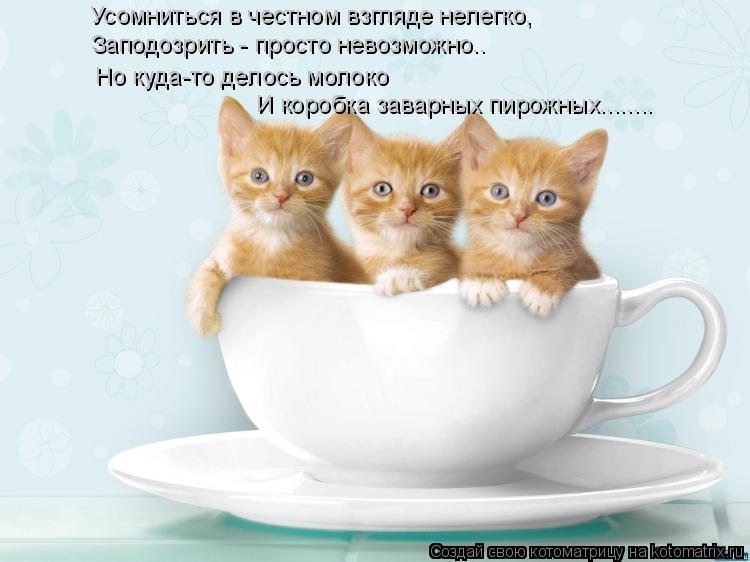 Котоматрица: Усомниться в честном взгляде нелегко, Заподозрить - просто невозможно..  Но куда-то делось молоко  И коробка заварных пирожных........