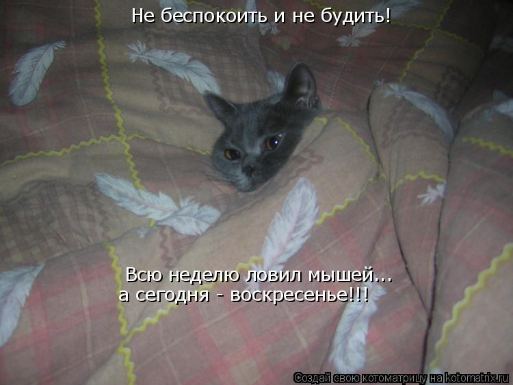 будет ли кошка ловить мышей