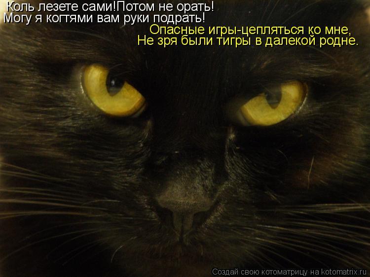 Котоматрица: Коль лезете сами!Потом не орать! Могу я когтями вам руки подрать! Опасные игры-цепляться ко мне, Не зря были тигры в далекой родне.