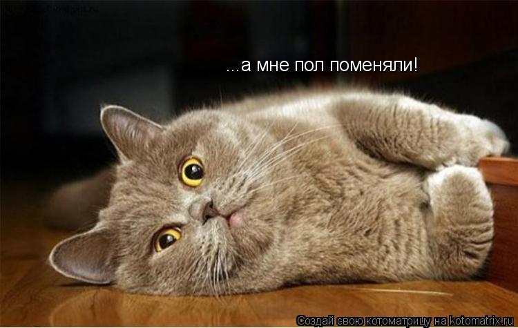 Котоматрица: ...а мне пол поменяли!